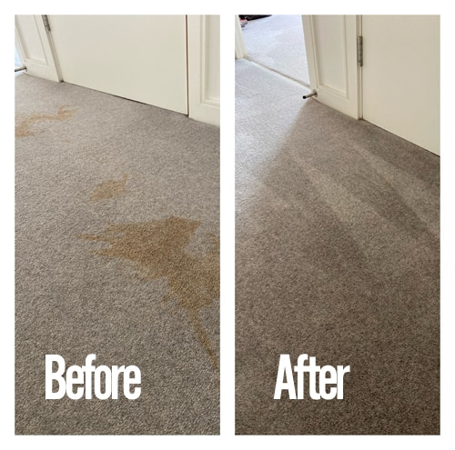 stain cleaning carpet before and after picture
